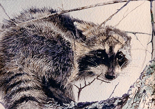 Rascally Racoon by Judith Angell Meyer