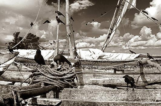Robert Lacy - Ravens