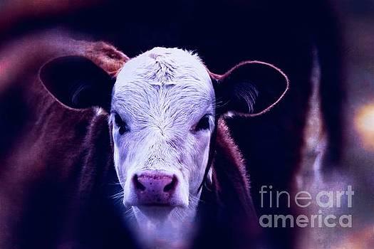Rawhide Trail #2 - Cow Art #594 by Ella Kaye Dickey