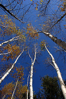 Reach for the Sky by Steve Augustin