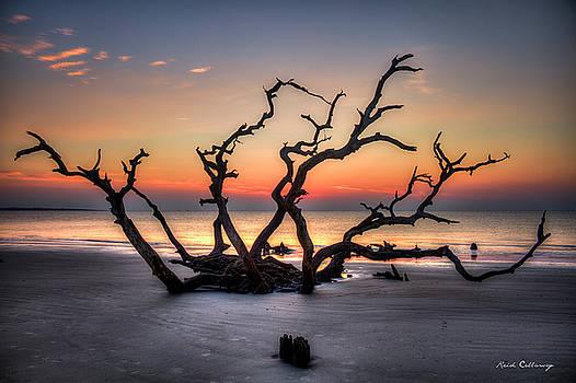 Reaching Driftwood Beach Sunrise Jekyll Island Georgia by Reid Callaway