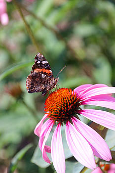 Carolyn Stagger Cokley - red admiral 1543