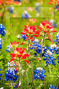 Red and Blue by Leesa Toliver