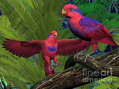 Corey Ford - Red and Blue Lory Parrots