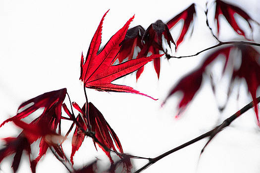 Red by Antonio Gruttadauria