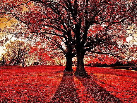 Red Autumn by E Robert Dee