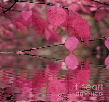 Red Autumn Leaf Reflections by Judy Palkimas