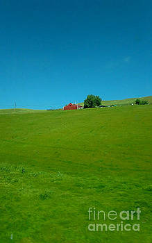 Red Barn, Green Grass And Blue Sky In California by Michael Hoard