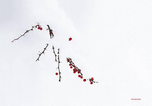 Red Berries by Ron Jones