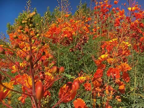 Red Bird of Paradise Garden by Chris Tarpening