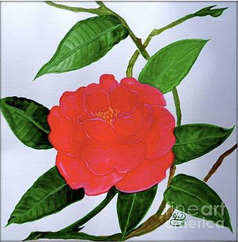 Red Camellia by Anna Folkartanna Maciejewska-Dyba