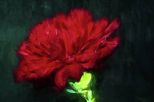 Red Carnation by Cathy Kovarik