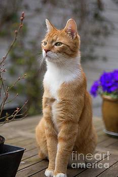 Patricia Hofmeester - Red cat alert