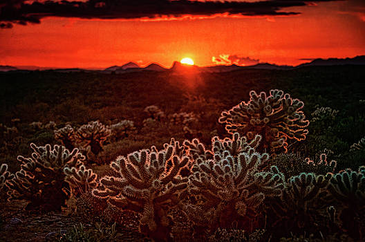 Red Cholla Sunset  by Saija Lehtonen