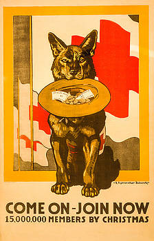 Red Cross Dog by David Letts
