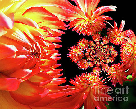Red Dahlia Flower Abstract by Smilin Eyes  Treasures