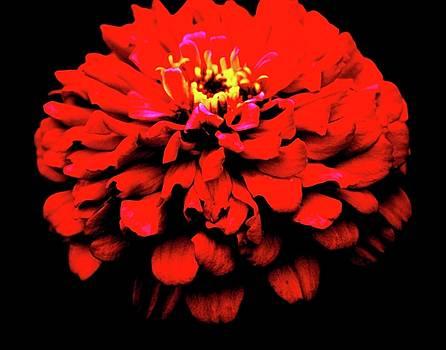 Red by Dana Flaherty