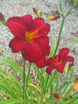 Cindy Boyd - Red Day Lilies 1