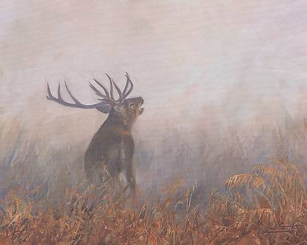 Red Deer Stag Early Morning by David Stribbling