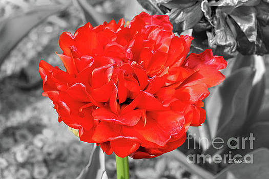 Red Flower by E B Schmidt
