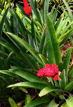Red Flower by Joseph Hollingsworth