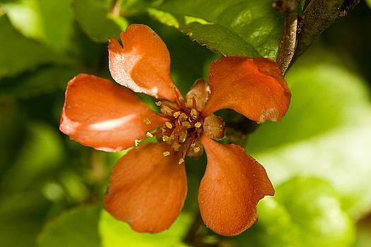 Red flower by Jouko Mikkola