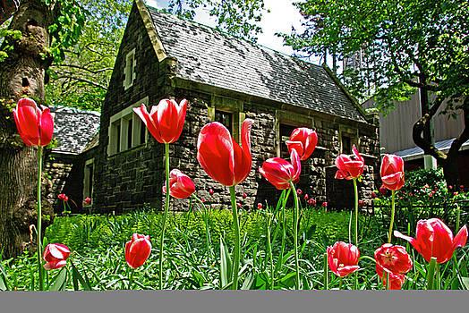 Red flowers in Central Park by Zalman Latzkovich