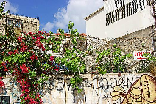 Red flowers on a wall by Zalman Latzkovich