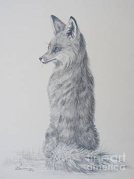 Red Fox by Laurianna Taylor