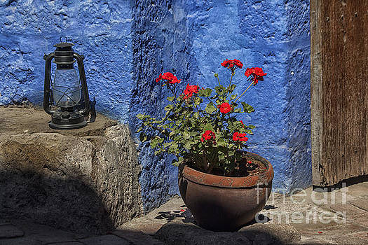 Patricia Hofmeester - Red geranium near a blue wall