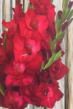 Cindy Boyd - Red Gladiolas