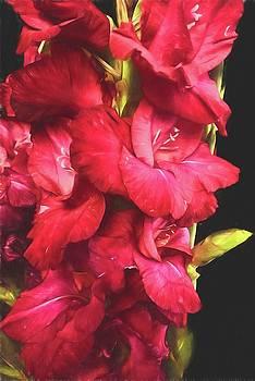 Cindy Boyd - Red Gladiolas on Black