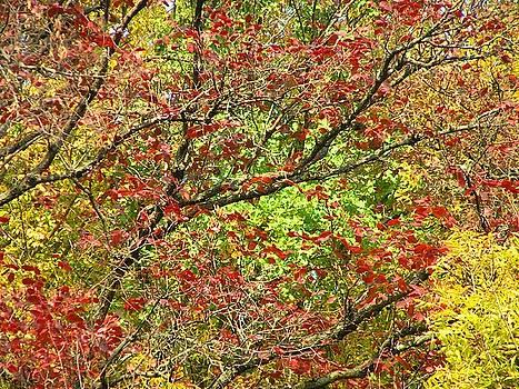 Gold Red Green Autumn by Oleg Zavarzin