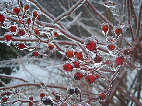 Red Ice Berries by Kristine Nora