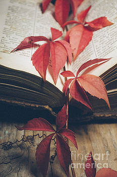 Red ivy by Jelena Jovanovic