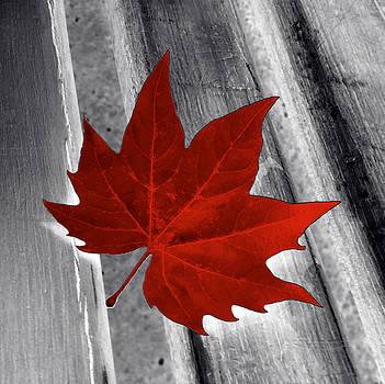 Red Leaf by Marinela Feier
