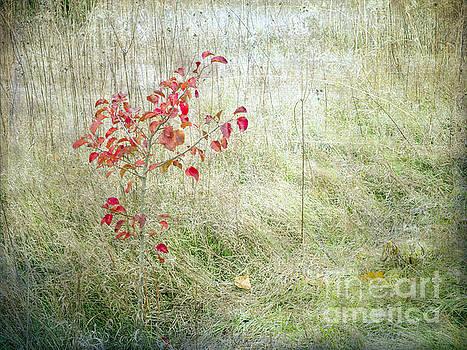 Red Leaves Amongst Grass by Tamara Becker