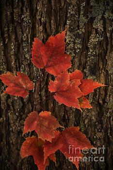 Red by Linda Blair