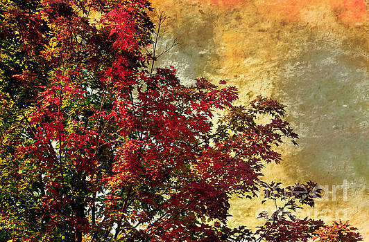 Red Maple trees by Elaine Manley