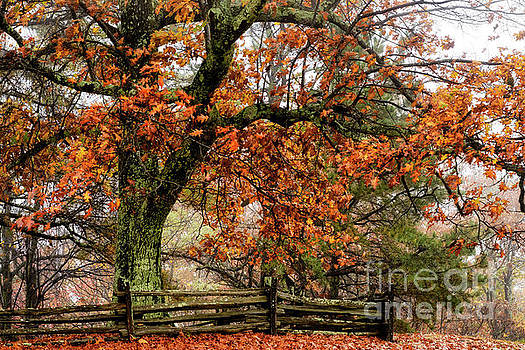 Red Oak and Rail Fence by Thomas R Fletcher