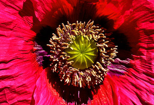 Red Poppy 014 by George Bostian