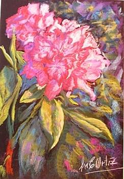 Red Rhododendron by Marieve Ortiz