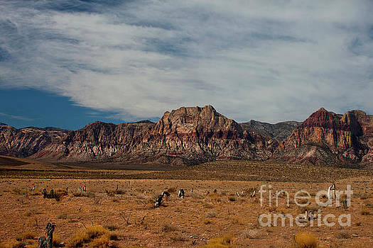 Red Rock Canyon by Ivete Basso Photography