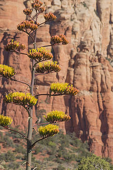 Red Rocks and Century Plant by Laura Pratt