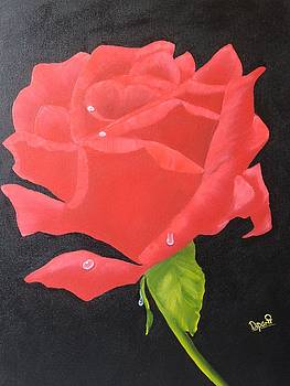 Red Rose by Dipali Deshpande