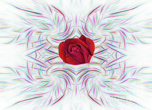 Red Rose in Abstract by Linda Phelps