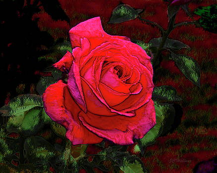 Red Rose by Joe Halinar