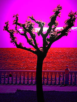 Red Sea by Ingrid Dance