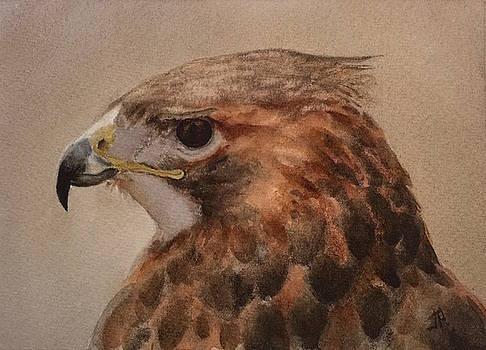 Red-shouldered Hawk by June Rollins