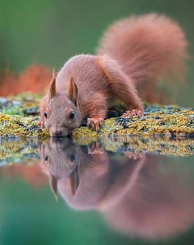 Red squirrel near the water by Sergey Ryzhkov